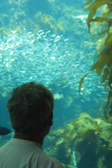 The Kelp Forest Aquarium Exhibit