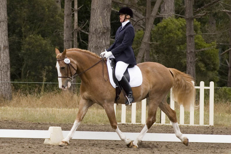 Pebble Beach Summer Dressage Show