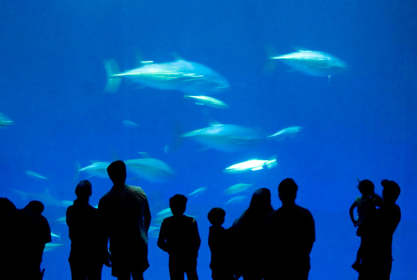 Printable Discount Tickets For Aquarium In Myrtle Images