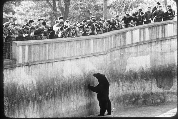 Russian Bear, Beijing Zoo, 1975