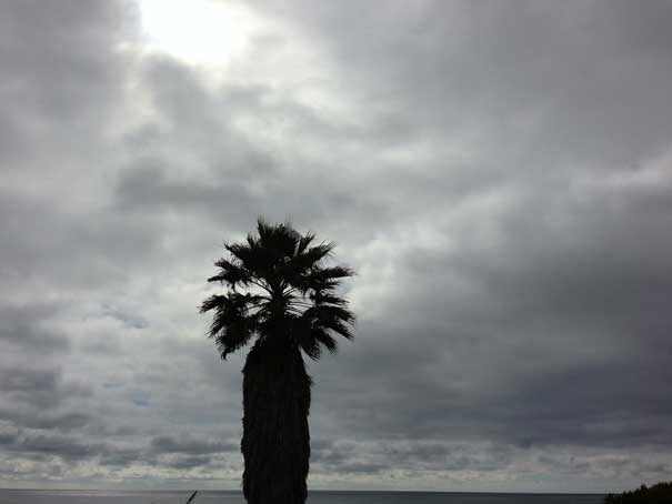 Palm Tree, Cardiff State Beach